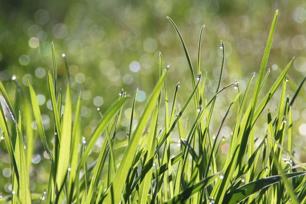 A trawa sama rośnie...