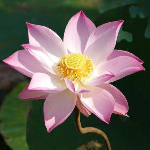 Nowa medytacja - oczyszczenie intencji do rozwoju